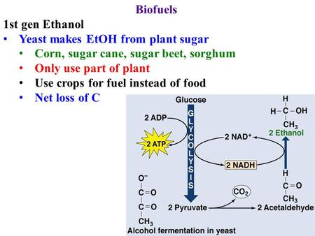 Biofuels 1st gen Ethanol Yeast makes EtOH from plant sugar Corn, sugar cane, sugar beet, sorghum Only use part of plant Use crops for fuel instead of food.