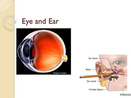 Eye and Ear. Eye The eye is covered in a tough layer of connective tissue called the sclera ◦ This is covered by a mucous membrane called the conjunctiva.