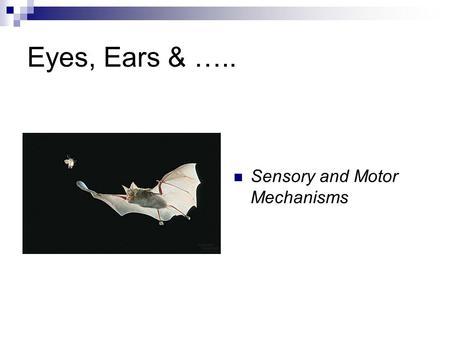 Eyes, Ears & ….. Sensory and Motor Mechanisms. Sensory Receptors Mechanoreceptors: stimulated by physical stimuli (i.e. pressure, touch, stretch, motion,