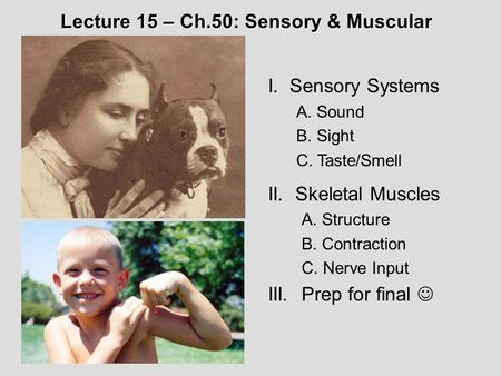 I. Sensory Systems A. Sound B. Sight C. Taste/Smell II. Skeletal Muscles A. Structure B. Contraction C. Nerve Input III.Prep for final Lecture 15 – Ch.50:
