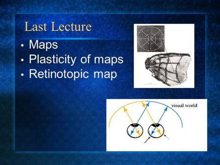 Maps Plasticity of maps Retinotopic map Last Lecture.