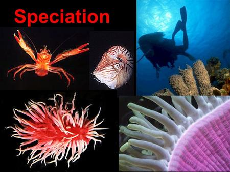 Speciation. (1) Geographic Mechanisms of Speciation (What circumstances lead to the formation of new species?) (2) Species Concepts ( How are Species.