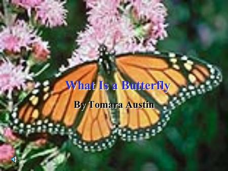 What Is a Butterfly What Is a Butterfly By Tomara Austin.