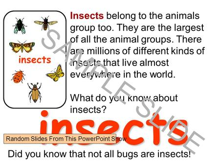 www.ks1resources.co.uk Insects belong to the animals group too. They are the largest of all the animal groups. There are millions of different kinds of.