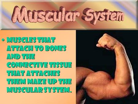 Muscles that attach to bones and the connective tissue that attaches them make up the muscular system.Muscles that attach to bones and the connective tissue.