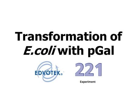 e coli transformation with plasmid pgal The ability to select transformed cells is critical to dna cloning by plasmid vector technology because the transformation of e coli dna cloning with plasmid.