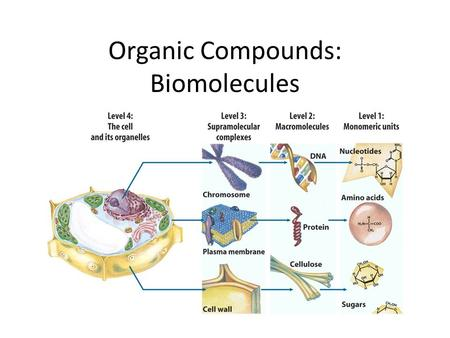 Organic Compounds: Biomolecules. I. Chemistry of Carbon A. Carbon has 4 valence e- B. Carbon can form 4 strong covalent bonds with atoms such as H, O,