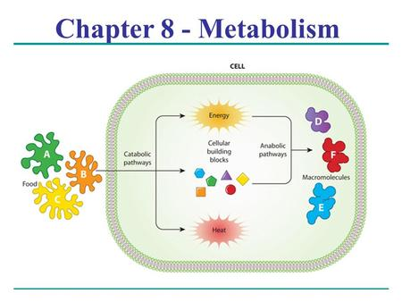 Chapter 8 - Metabolism. Overview: The Energy of Life The living cell is a miniature chemical factory where thousands of reactions occur The cell extracts.