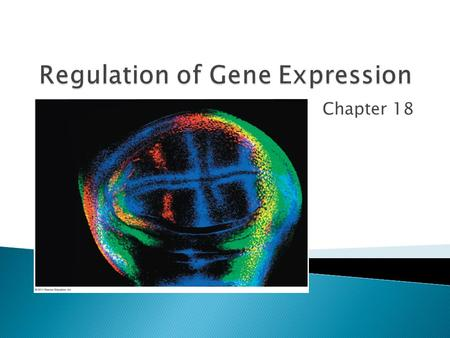 Chapter 18. Transcription  E. coli's DNA is tightly coiled so it will fit inside the cell ◦ most of the DNA is found in the nucleoid region  Most bacteria.
