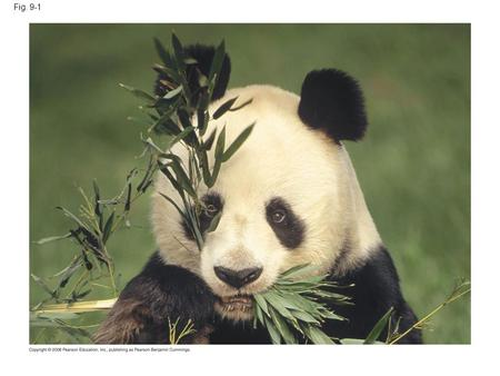 Fig. 9-1 Figure 9.1 How do these leaves power the work of life for the giant panda?
