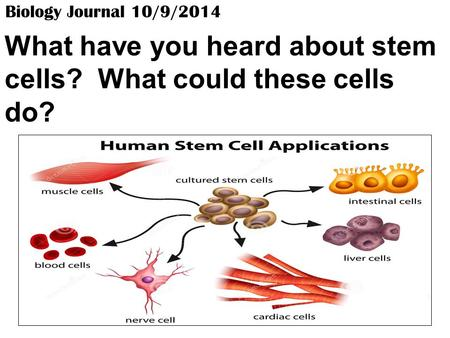 Biology Journal 10/9/2014 What have you heard about stem cells? What could these cells do?