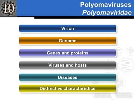 Polyomaviruses Polyomaviridae Virion Genome Genes and proteins Viruses and hosts Diseases Distinctive characteristics.