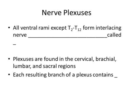 Nerve Plexuses All ventral rami except T 2 -T 12 form interlacing nerve ___________________________called _ Plexuses are found in the cervical, brachial,
