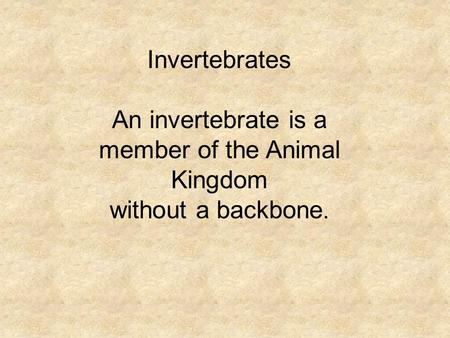 Invertebrates An invertebrate is a member of the Animal Kingdom without a backbone.