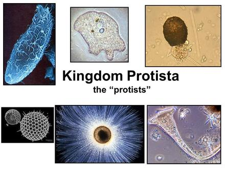 "Kingdom Protista the ""protists"""
