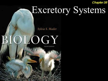 Excretory Systems Chapter 38. Excretory Systems 2Outline Body Fluid Regulation  Aquatic Animals ­Marine Bony Fish ­Freshwater Bony Fish  Terrestrial.