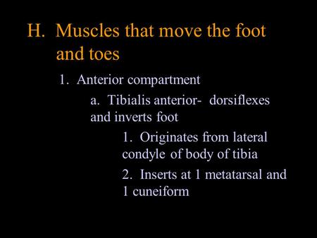 H. Muscles that move the foot and toes 1. Anterior compartment a. Tibialis anterior- dorsiflexes and inverts foot 1. Originates from lateral condyle of.