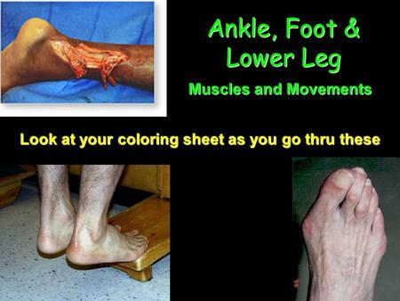 Ankle, Foot & Lower Leg Muscles and Movements Look at your coloring sheet as you go thru these.