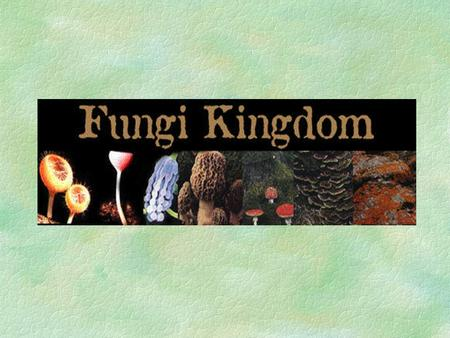 Kingdom Fungi-Introduction §This is a very diverse group of organisms that includes yeasts, molds, rusts, and smuts. §Fungi lack chlorophyll and do not.