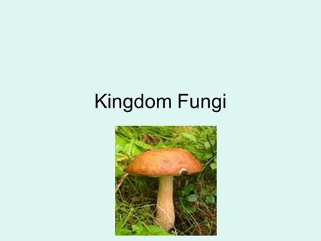 Kingdom Fungi. Characteristics of Fungi –Fungi are eukaryotic heterotrophs that have cell walls. –Their cell walls contain chitin, a complex carbohydrate.