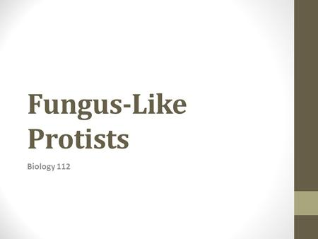 Fungus-Like Protists Biology 112. General Characteristics Similar to fungi in that they are heterotrophs that absorb food from dead or decaying organic.