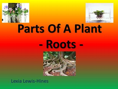 Parts Of A Plant - Roots - Lexia Lewis-Hines The student will learn: to tell the main functions of a root. to identify place where roots can grow. to.