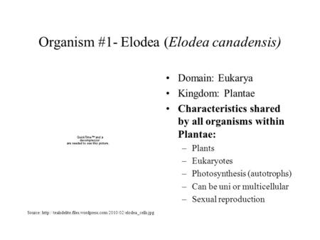 Organism #1- Elodea (Elodea canadensis) Domain: Eukarya Kingdom: Plantae Characteristics shared by all organisms within Plantae: –Plants –Eukaryotes –Photosynthesis.