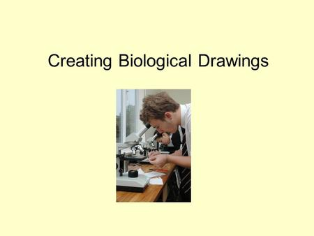 Creating Biological Drawings. Proper Biological Drawings Name Date Type of Cell (Total Magnification) e.g. 400 X label 1 label 2 label 3 Note: Use blank.
