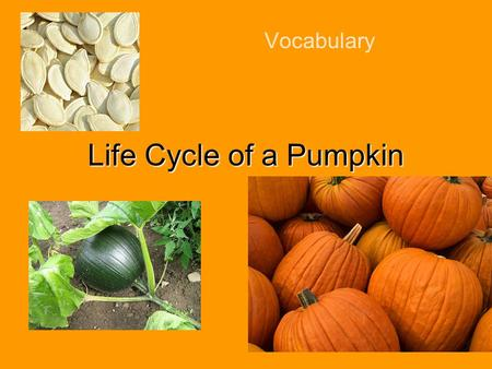 Vocabulary Life Cycle of a Pumpkin Let's Say the Words everywhere machines move woman work world bumpy fruit harvest smooth soil vine.