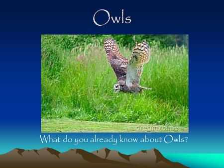 "Owls What do you already know about Owls? Owl Facts Owls are known as ""Birds of Prey"" or Raptors (A bird that has sharp beak and claws and uses them."