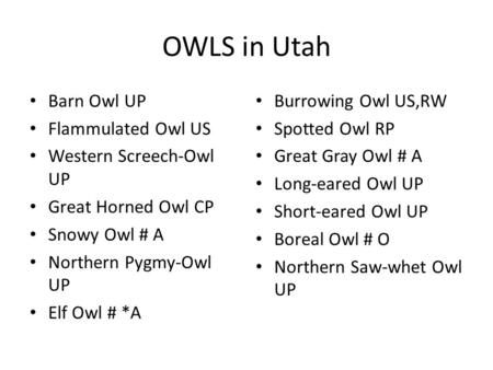 OWLS in Utah Barn Owl UP Flammulated Owl US Western Screech-Owl UP Great Horned Owl CP Snowy Owl # A Northern Pygmy-Owl UP Elf Owl # *A Burrowing Owl US,RW.