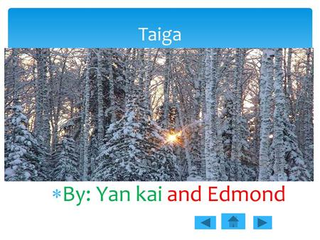  By: Yan kai and Edmond Taiga.  There is not a large variety of plants life in taiga because the climate is very cold.  Four kinds of conifers are.
