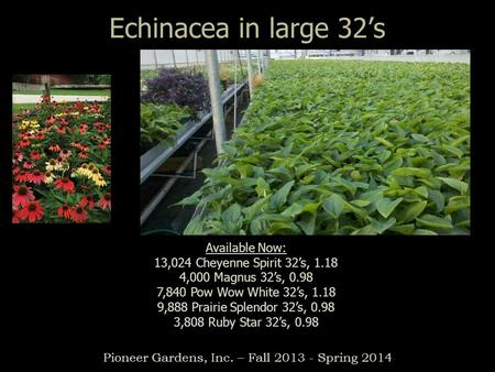 Echinacea in large 32's Pioneer Gardens, Inc. – Fall 2013 - Spring 2014 Available Now: 13,024 Cheyenne Spirit 32's, 1.18 4,000 Magnus 32's, 0.98 7,840.