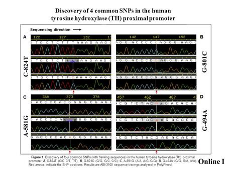 Discovery of 4 common SNPs in the human tyrosine hydroxylase (TH) proximal promoter Figure 1. Discovery of four common SNPs (with flanking sequences) in.