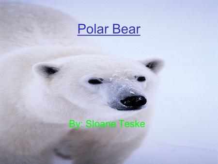 Polar Bear By: Sloane Teske. Controlling Body Temperature They use there fur to keep them warm in the winter. They are ecdothermic.