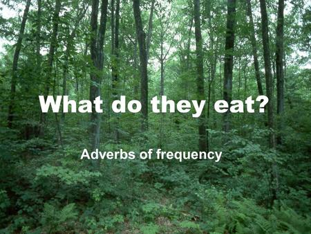 What do they eat? Adverbs of frequency. What do they eat?