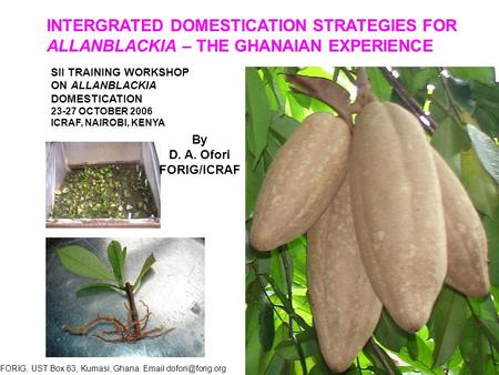 INTERGRATED DOMESTICATION STRATEGIES FOR ALLANBLACKIA – THE GHANAIAN EXPERIENCE SII TRAINING WORKSHOP ON ALLANBLACKIA DOMESTICATION 23-27 OCTOBER 2006.