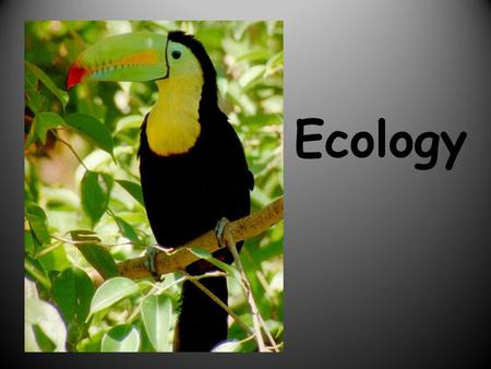 Ecology. Part1-WHAT IS ECOLOGY? Ecology- the scientific study of interactions between organisms and their environments. Ecology is a science of relationships.