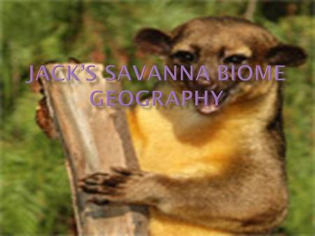  My Words: Savanna's are grasslands with Shrubs and isolated trees that can be found in a desert biome and tropical rainforest, there is not enough water.