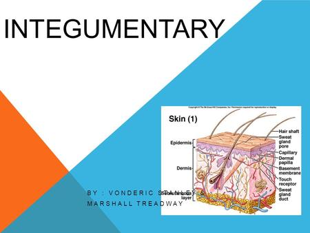 INTEGUMENTARY BY : VONDERIC STANLEY & MARSHALL TREADWAY.