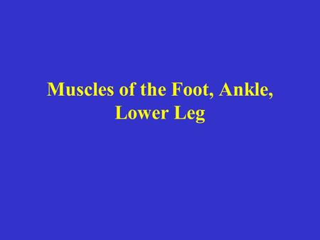 Muscles of the Foot, Ankle, Lower Leg. Gastrocnemius Origin Medial head medial femoral condyle; Lateral head lateral condyle Insertion the Achilles tendon,