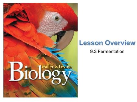 Lesson Overview Lesson OverviewFermentation Lesson Overview 9.3 Fermentation.