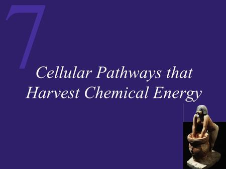 7 Cellular Pathways that Harvest Chemical Energy.