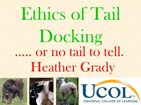 Ethics of Tail Docking ….. or no tail to tell. Heather Grady.