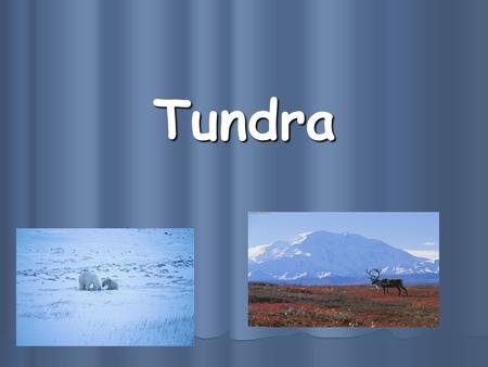 Tundra. Tundra is… A treeless area between the icecap and the tree line of Arctic regions, having a permanently frozen subsoil and supporting low-growing.