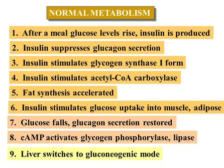 NORMAL METABOLISM NORMAL METABOLISM 1. After a meal glucose levels rise, insulin is produced 2. Insulin suppresses glucagon secretion 3. Insulin stimulates.