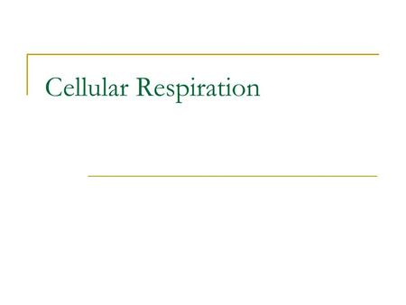 Cellular Respiration. What is Cellular Respiration? The process of converting food energy into ATP energy C 6 H 12 O 6 + 6 O 2 → 6 CO 2 + 6 H 2 O + 36.