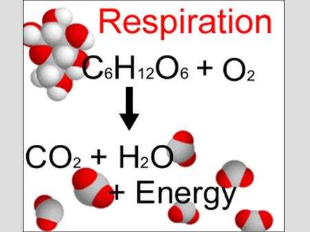 Lecture 6 Outline (Ch. 9) I.Overview of Respiration II.Redox Reactions III.Steps of Respiration IV.Cellular Respiration A. Glycolysis B. Coenzyme Junction.