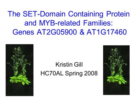 The SET-Domain Containing Protein and MYB-related Families: Genes AT2G05900 & AT1G17460 Kristin Gill HC70AL Spring 2008.