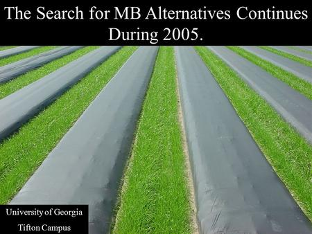 The Search for MB Alternatives Continues During 2005. University of Georgia Tifton Campus.